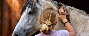 Инструменты для чистки лошадей