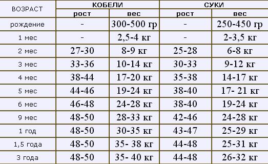 Таблица веса американского бульдога