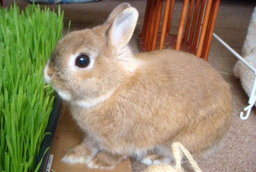 Как правильно выбрать декоративного кролика?