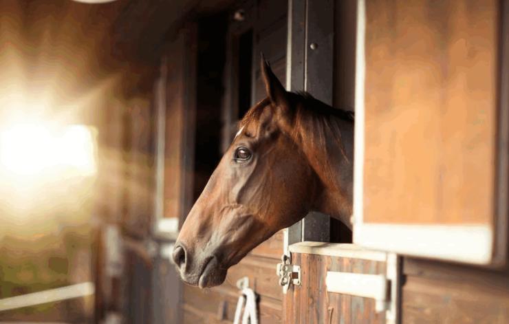 Насколько легко содержать лошадь