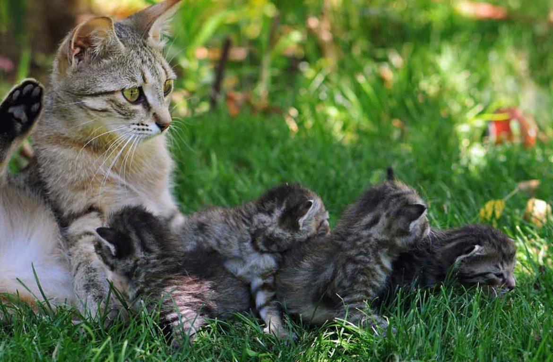 Последствия раннего отъёма щенков и котят