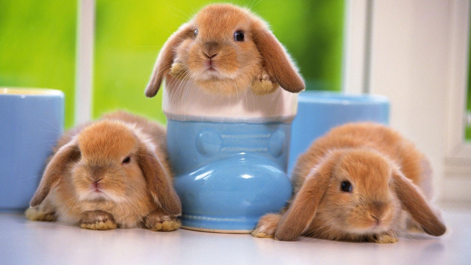 Защита декоративных кроликов от опасных инфекций