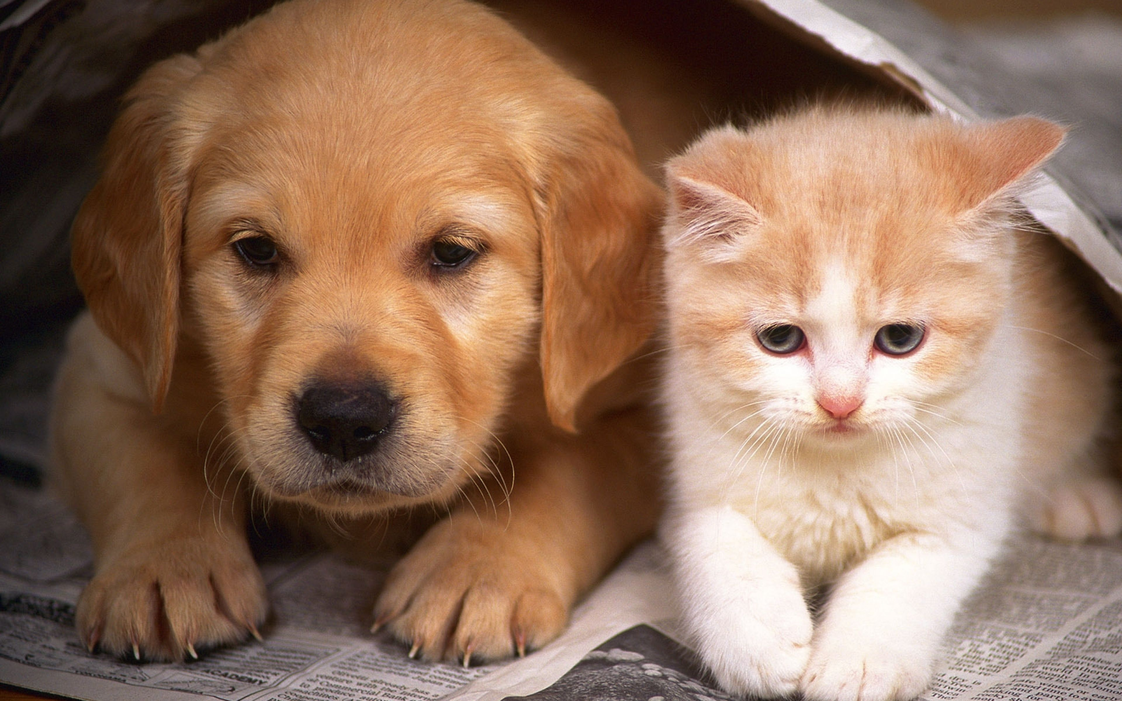 Аллергии собак и кошек