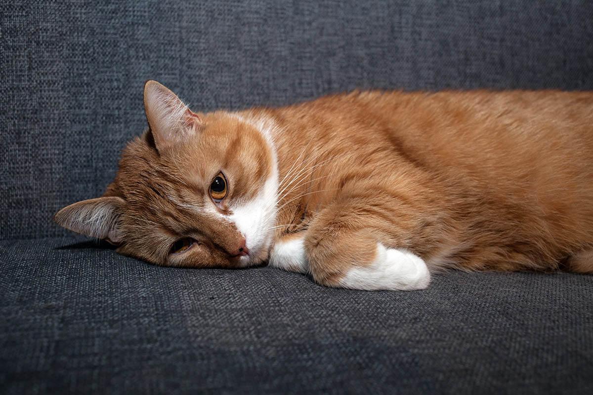 Мочекаменная болезнь котов и кошек