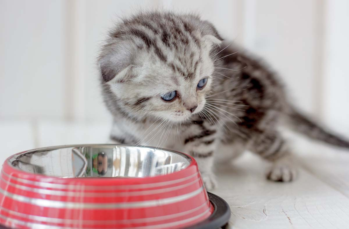 О кормлении котят