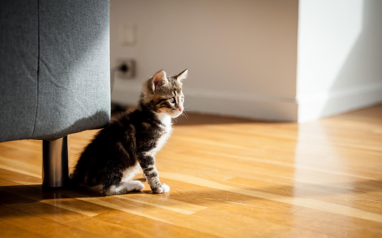 Привыкание котёнка к новому дому