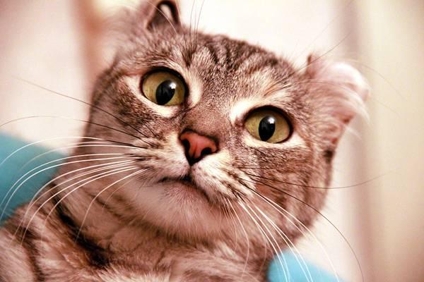 Выделения из глаз кошек и промывание глаз кошке