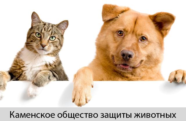 Каменское общество защиты животных Zooщит