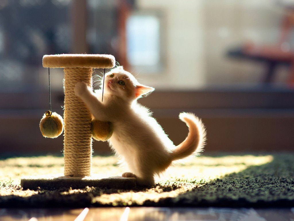 Кошки точат когти