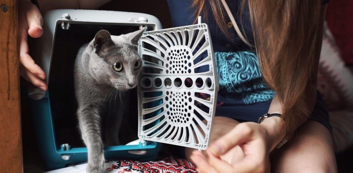 Перевозка кота