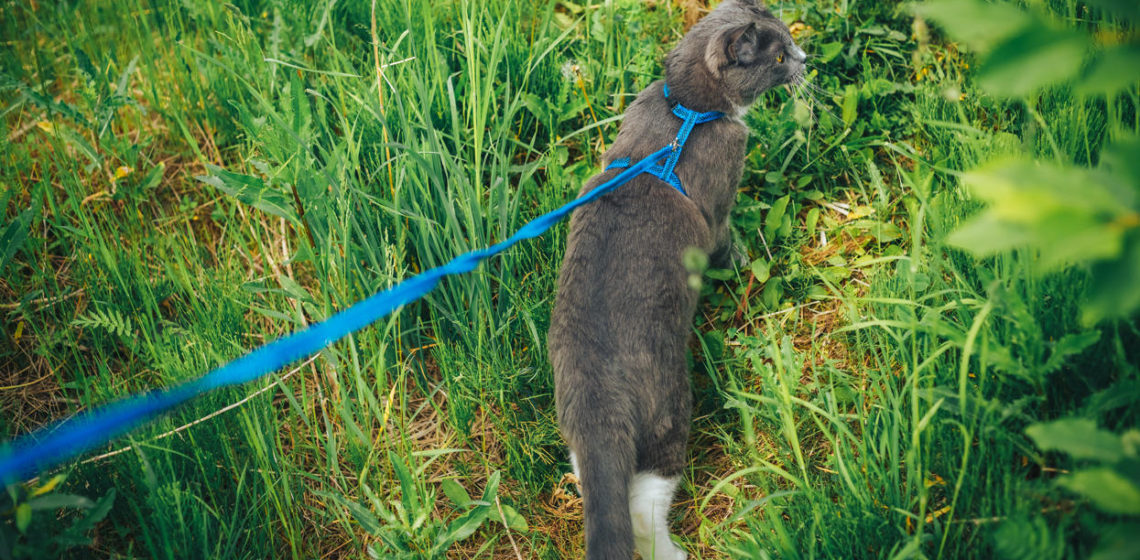 Выгул кошек
