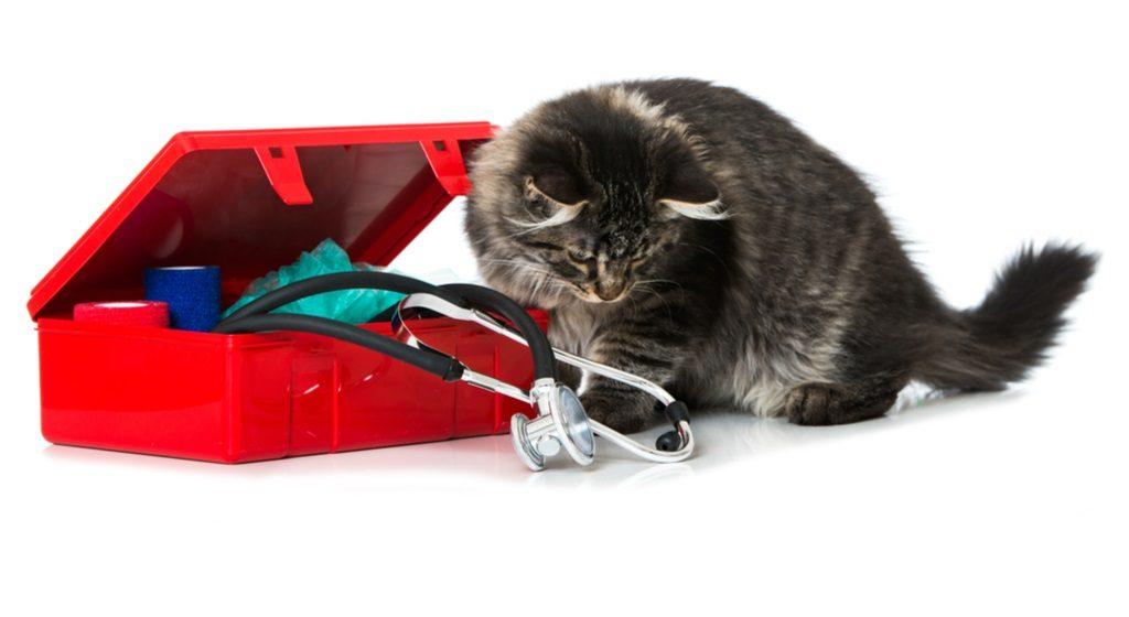 Что должно быть в ветеринарной аптечке (зооаптечке)