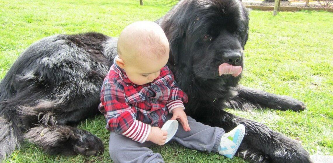 Интеллект собаки равен интеллекту 2-х летнего ребенка